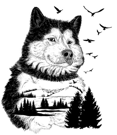 wildlife: Wolf for your design, wildlife concept Illustration