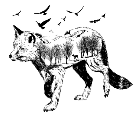 Double exposure, silhouette of fox for your design, wildlife concept