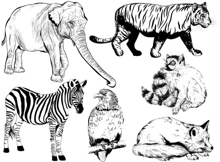 vulture: Vector set of hand drawn animal (fox, Ring - tailed lemur, zebra, elephant, tiger, vulture) Illustration