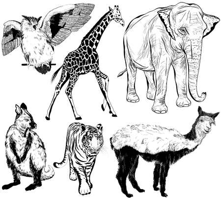 Vector set of hand drawn animal (alpaca, Ring - tailed lemur, giraffe, eagle-owl, owl, elephant, tiger, vulture)