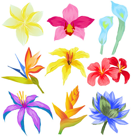 Vector set of Tropical flowers Illustration