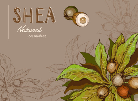 Background with Shea nuts and branch