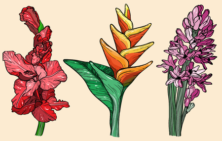 Flowers set gladiolus, hyacinth and bird of paradise flower, vector illustration