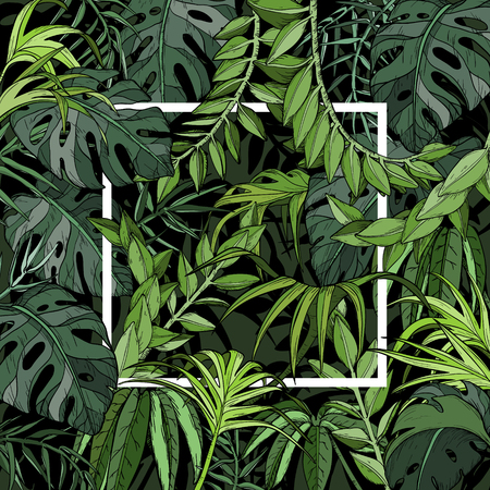 Vector Tropical background with palm leaves, jungle plants and white frame
