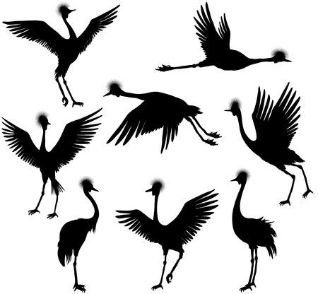 Set of grey crowned cranes, vector illustration Illustration