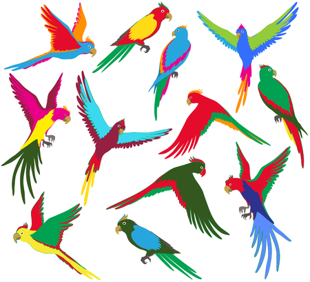 Vector colorful jungle parrot set on white background