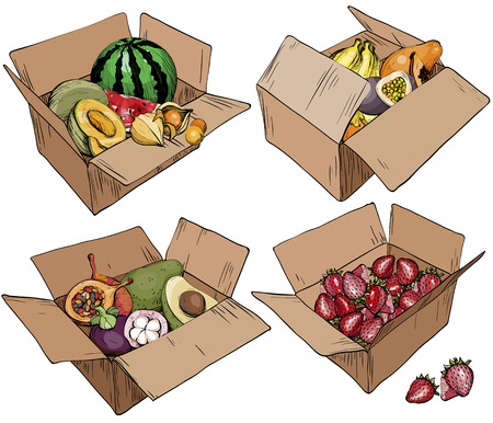 Set of cardboard box with various fruits. Vector illustration