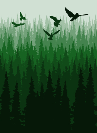 Vector illustration of Coniferous forest, pine trees silhouette template.