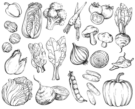 Collection of hand-drawn vegetables, vector illustration in vintage style, black and white.