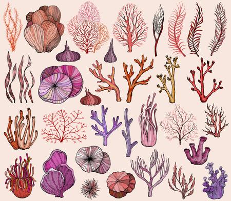 Set of marine hand drawn corals, vector illustration