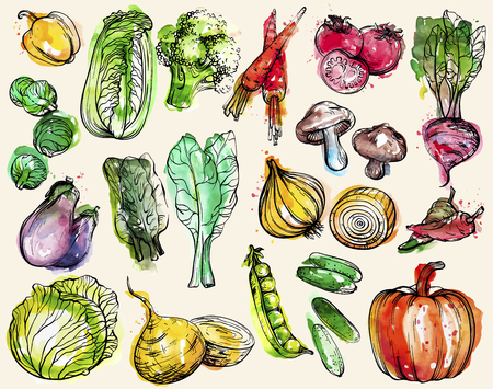 Collection of hand-drawn watercolor vegetables, vector illustration Çizim