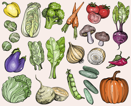 Collection of hand-drawn vegetables Illustration