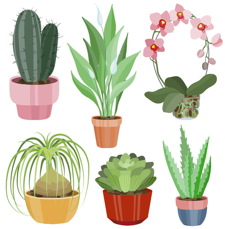 Collection with flat flowers in pots, vector illustration