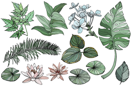Vector Set green branches, flowers and leaves, hand drawn design plant elements