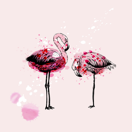 Hand drawing Flamingo birds, watercolor vector Illustration