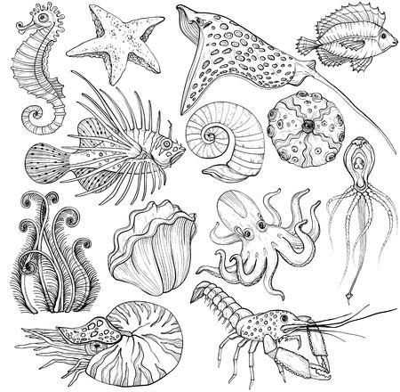 Set with hand drawn marine life.