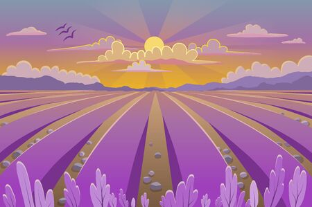 Provence landscape with lavender field