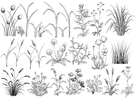 Field flowers and grass, black and white hand drawn illustration Ilustracja