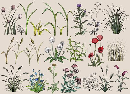 Field flowers and grass, hand drawn illustration