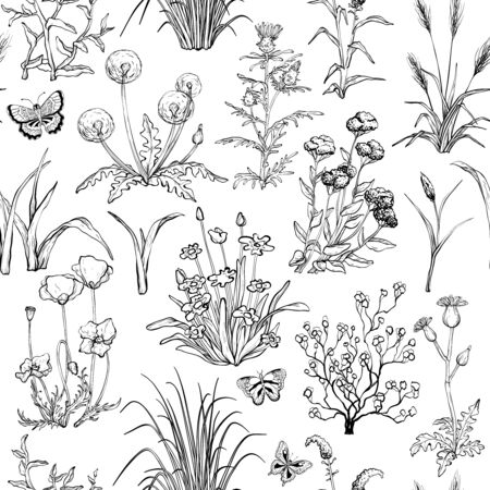 Seamless black and white pattern with Hand drawn Field herbs, flowers and grass Ilustracja