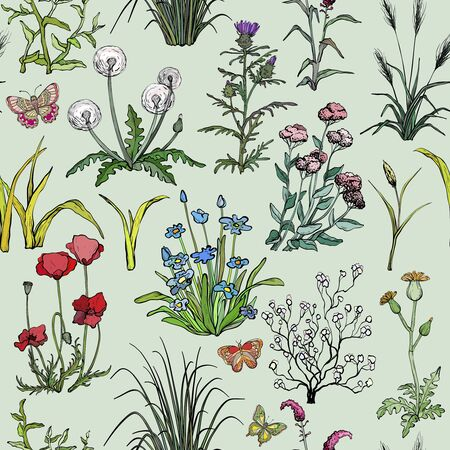 Seamless pattern with Hand drawn Field herbs, flowers and grass