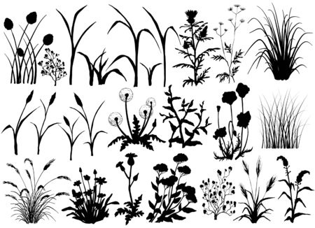 Silhouette of Field flowers and grass, butterfly, hand drawn illustration