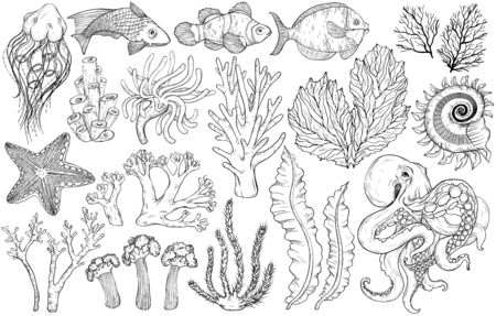 Sketch of deepwater living organisms, fish and algae, vector illustration. Black and white