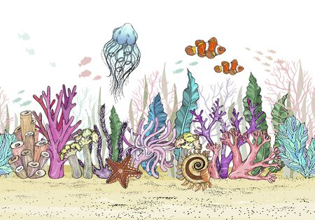 Seamless pattern with Hand drawn sea anemones coral reef, oceanic animal.