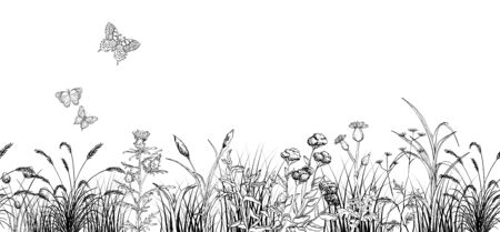 Field butterflys over flowers and grass landscape, black and white Ilustracja