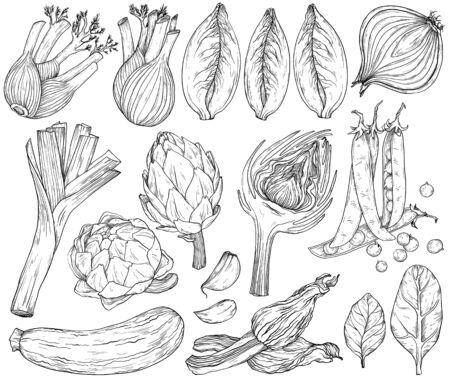 Set of nature mediterranean vegetables. Fresh organic food. Vegetables vintage Hand-drawn sketch. Black and white Vettoriali