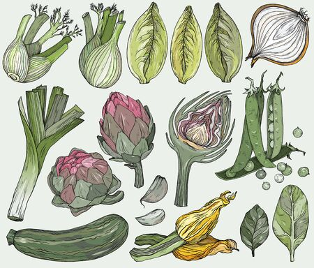 Set of nature mediterranean vegetables. Fresh organic food. Vegetables vintage Hand-drawn sketch.