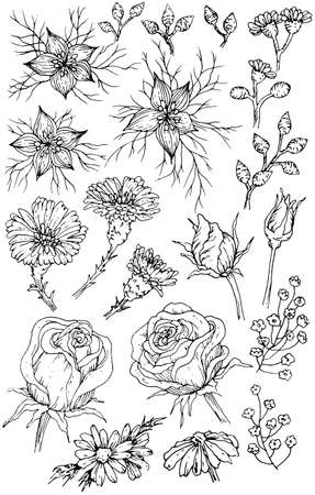 Collection of hand drawn flowers and plants. Black and white