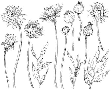 Collection of hand drawn flowers and brunchs. Black and white