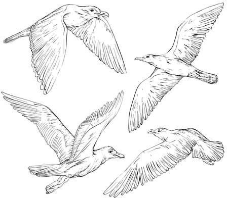 Set of hand drawn seagulls, black and white