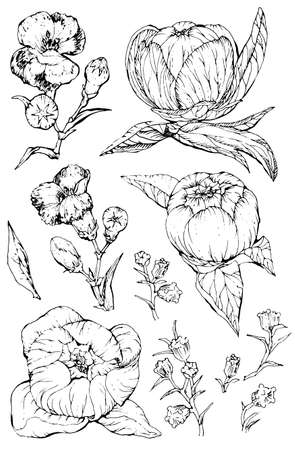 Collection of hand drawn peony flowers and plants. Black and white