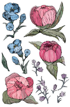 Collection of hand drawn peony flowers and plants Vettoriali