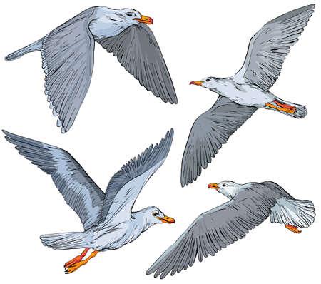 Set of hand drawn seagulls