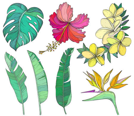 Summer tropical palm leaves and flowers, jungle plants.