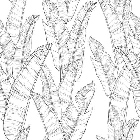 Seamless pattern with palm banana leaf and plants. Floral background jungle. Black and white