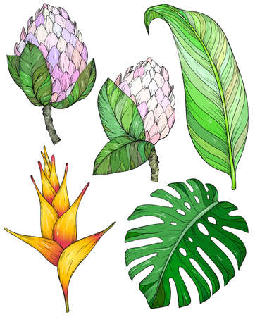 Tropical flowers and leaves. Set of hand drawn jungle leaves and exotic flowers