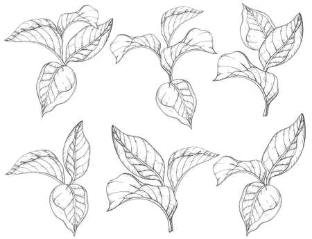 Seamless pattern with forest leafs. Black and white