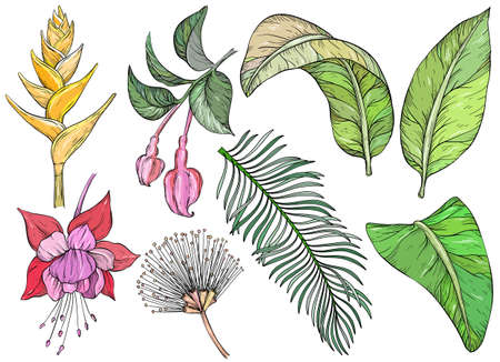 Tropical flowers and leaves. Set of hand drawn jungle leaves and exotic plants Иллюстрация
