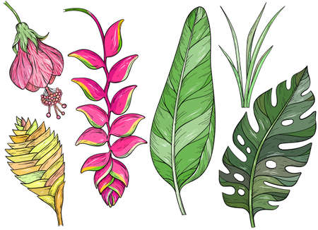 Set of hand drawn jungle leaves and exotic flowers