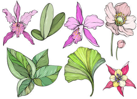 Set of hand drawn jungle leaves and exotic flowers. Orchid flower and tropical leaves
