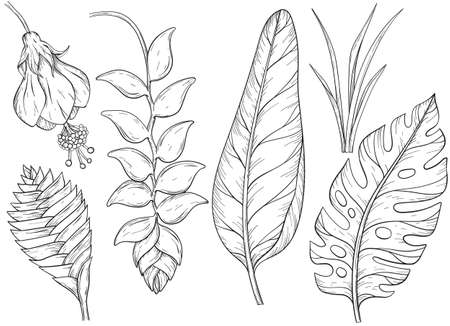 Set of hand drawn jungle leaves and exotic flowers. Black and white