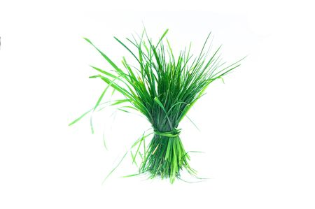 A tuft of succulent grass made on white background