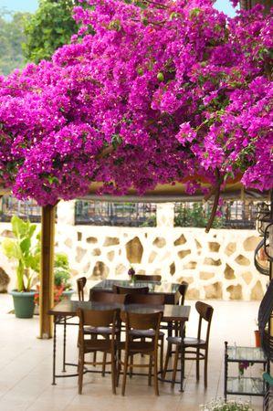 Open-air restaurant