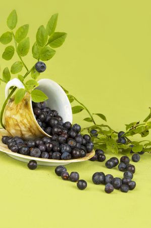 blueberry bushes: Blueberry in cup on green background