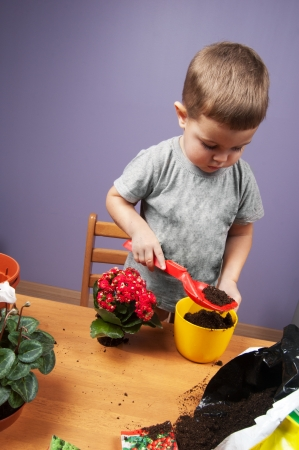 replanting: Two-years old child replanting flowers Stock Photo