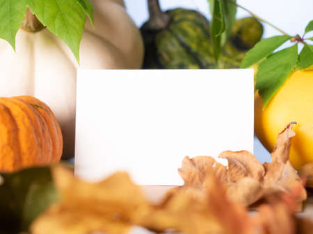Empty white business card in front of decorative pumpkins on the table Stok Fotoğraf